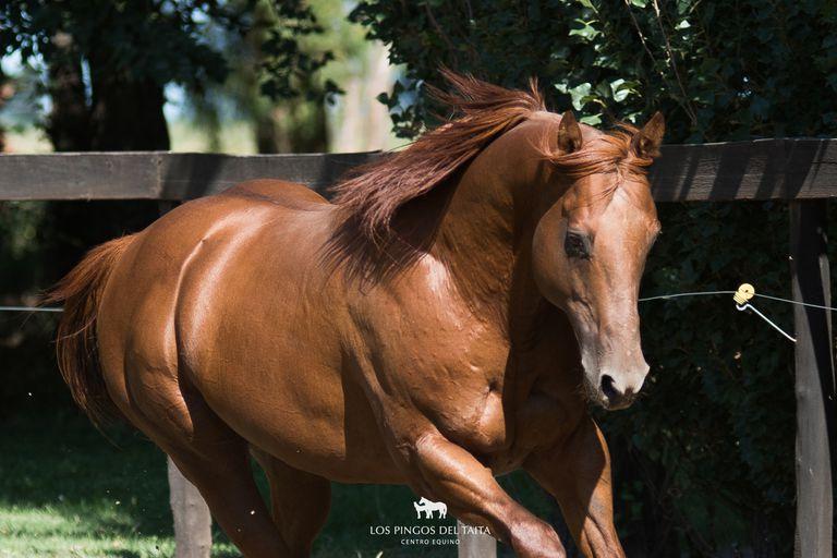 El Washington cordobés, cuna de los mejores caballos de polo