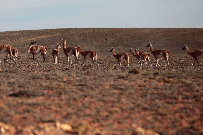 La legislatura santacruceña analiza la prórroga por un año de la ley que prohíbe crear nuevas áreas naturales