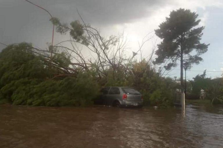 Tormenta en San Rafael: un hombre murió aplastado por un árbol