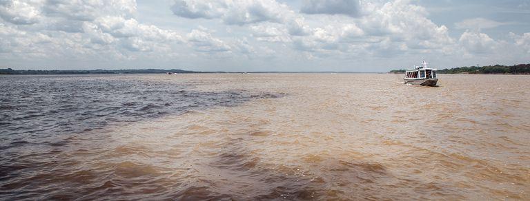Amazonas: así es la capital de la biodiversidad mundial, hoy en peligro