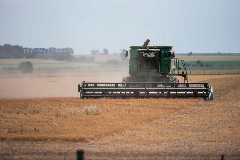 En soja se subieron las retenciones de 24,7 a 33%. En trigo y maíz de 6,7 a 12% y para estos últimos dos cultivos el Gobierno por ley podría aumentar otros tres puntos