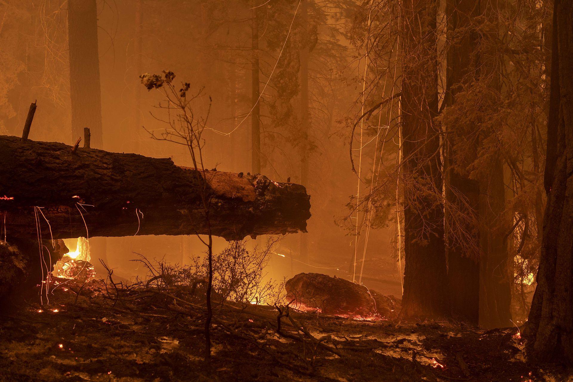 El cambio climático y los años de sequía hacen que los incendios forestales se vuelvan más grandes y calientes