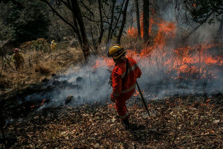 Incendios: el gobierno de Córdoba denunció las ventas de terrenos quemados