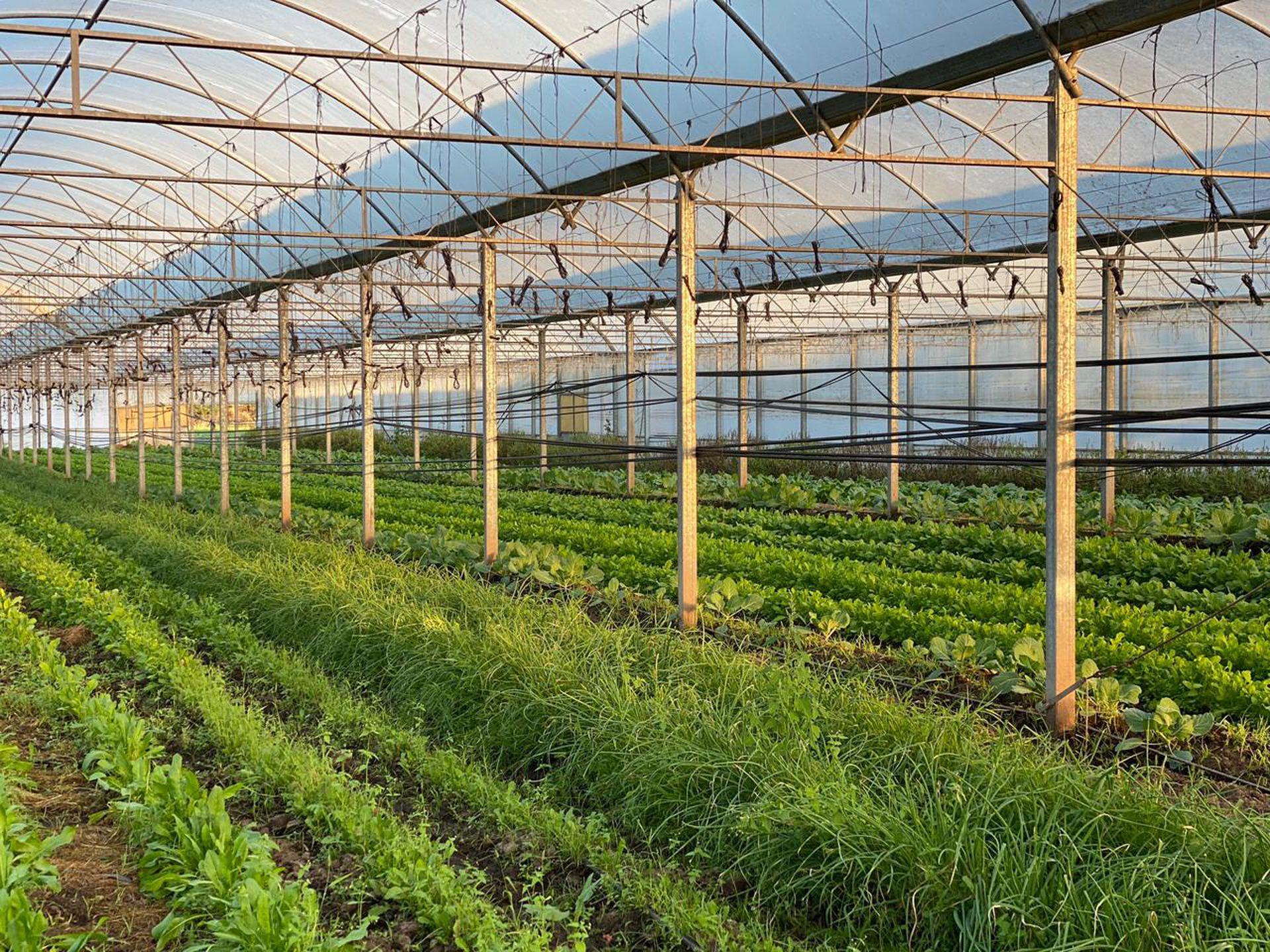 Tallo Verde, la empresa de huertas orgánicas de Viviana Novelle