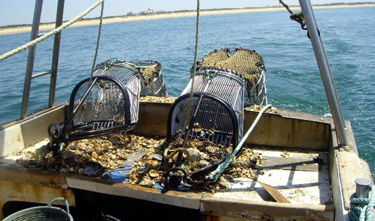 19-08-2008 Pesca, barcos pesqueros POLITICA ESPAÑA EUROPA ANDALUCÍA ECONOMIA JUNTA DE ANDALUCÍA