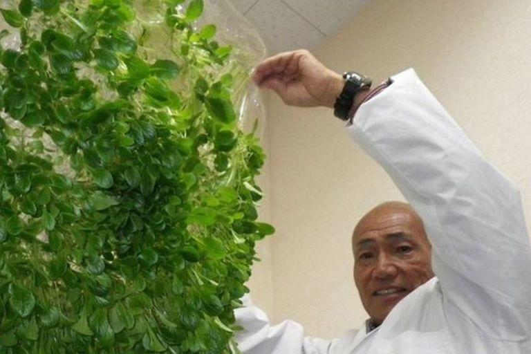 Yuichi Mori se inspiró en las membranas utilizadas en los riñones artificiales para desarrollar películas de polímeros para su uso en la agricultura
