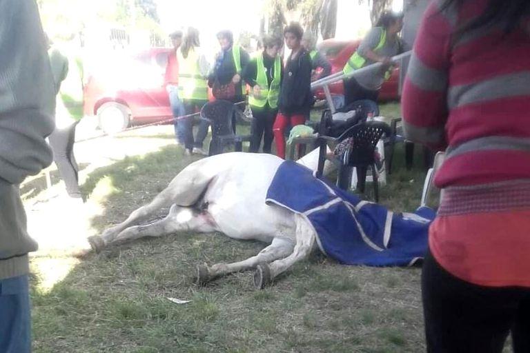 Cómo se gestó la prohibición de la peregrinación a caballo y el drama que esconde