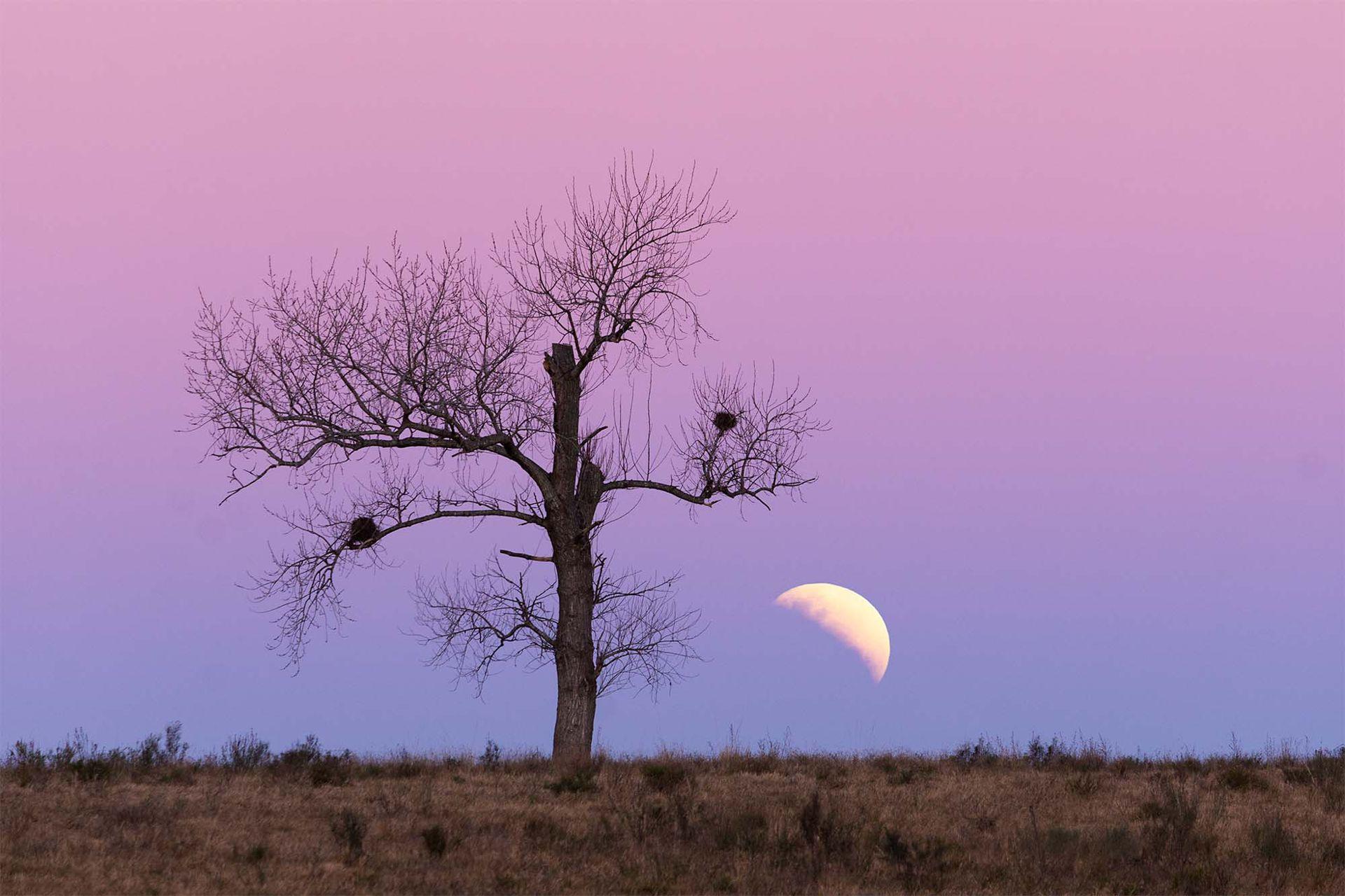 El eclipse lunar fue parcial, es decir, la sombra de la Tierra no llegó a cubrir completamente la superficie de la Luna. Como Fefo sabía que el eclipse sucedería bajo en el horizonte, un par de horas antes de que suceda viajó por la ruta buscando un árbol como primer plano para que acompañe a la lun