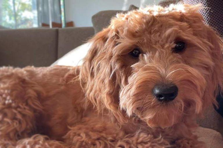 Matthew Perry mostró a su perro Alfred en el living de su casa y ofreció un inusual panorama de su intimidad