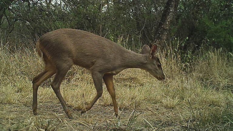 En la región que ocupa el Parque Nacional hay gran diversidad de animales