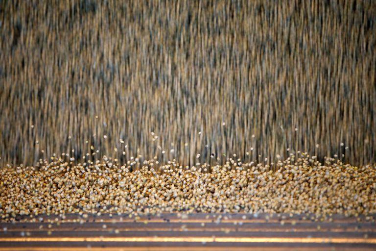 Los precios del maíz y de la soja cayeron un 3,7 y un 2,4% en Chicago