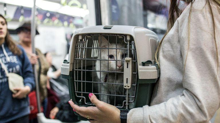 Las mascotas deben ser trasladadas en cajas especiales