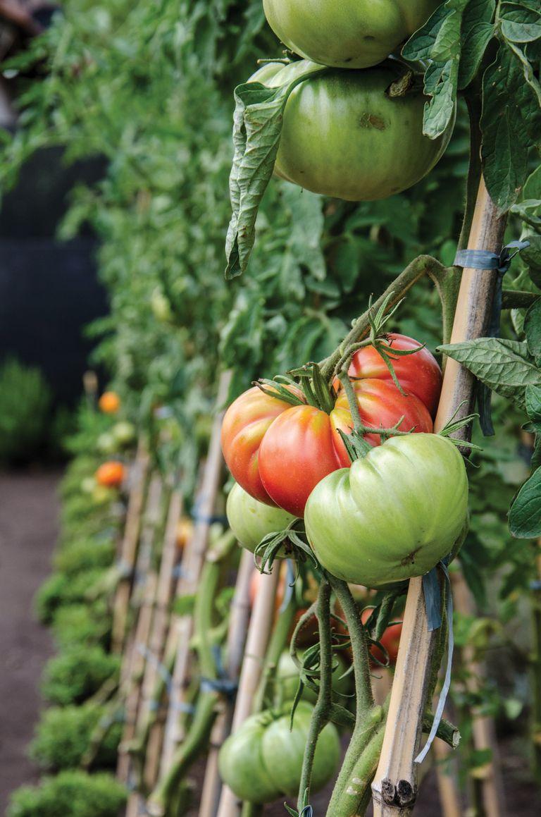 Cinco verduras de fácil cultivo para sumar a tu huerta en esta época