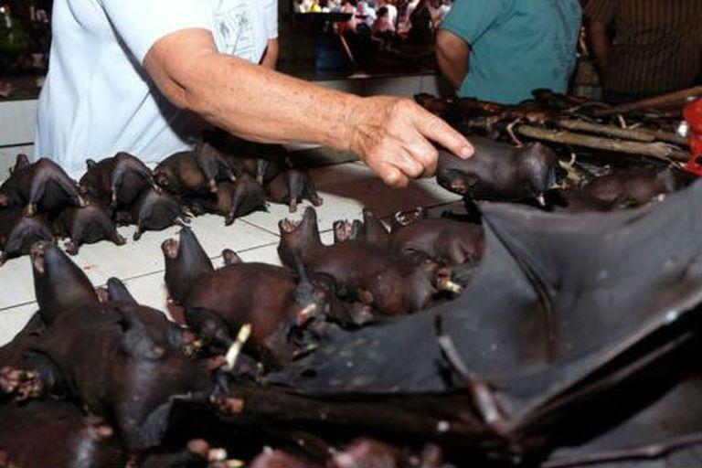 """El """"murciélago de herradura"""" sería el reservorio animal del nuevo coronavirus"""