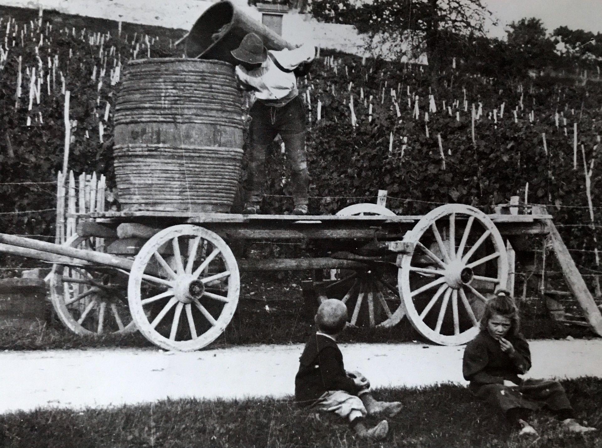 Grandes carromatos eran utilizados en las cosechas.