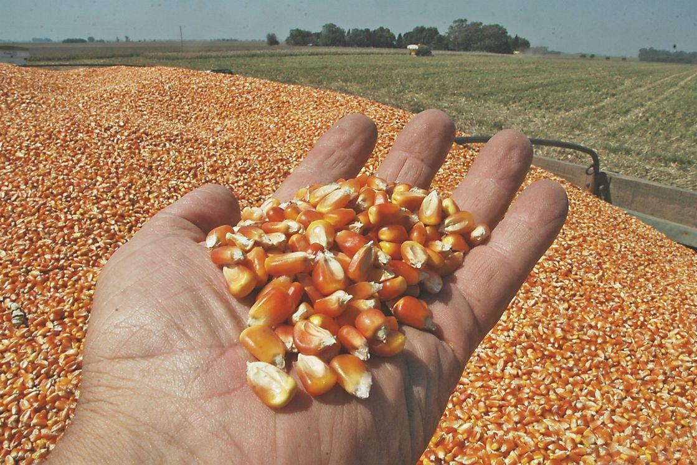 Volvió la intervención al mercado: el Gobierno cerró las exportaciones de  maíz - LA NACION