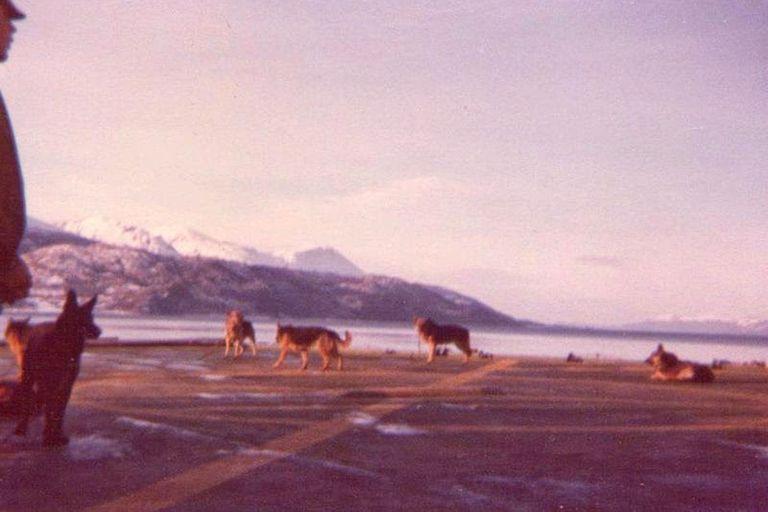 Perros Veteranos de la Guerra de Malvinas (VGM) vuelven al continente a bordo del ARA Almirante Irízar