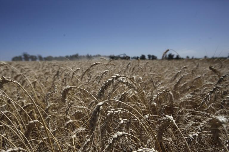 Se abre un panorama positivo para la campaña del cereal