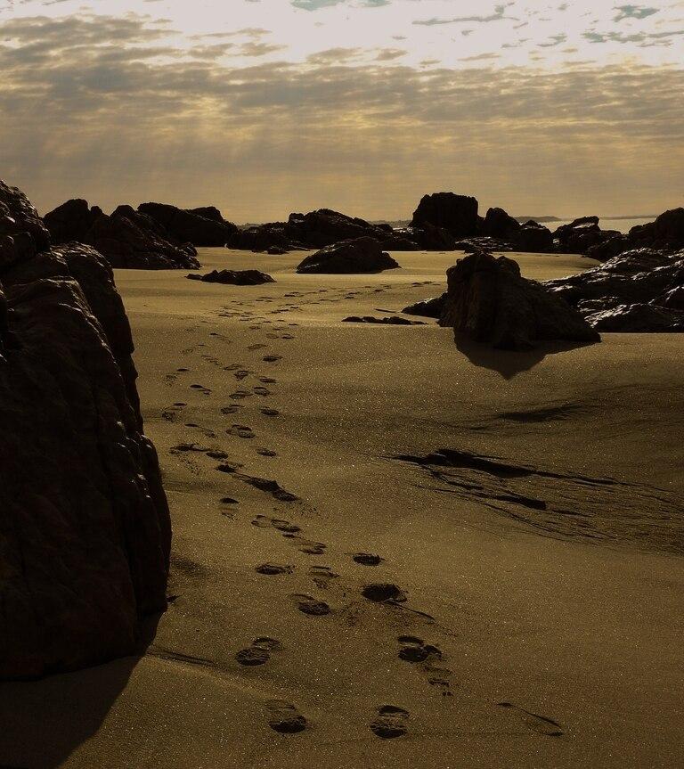 Playas desérticas, avistaje de fauna marina y atardeceres de postal
