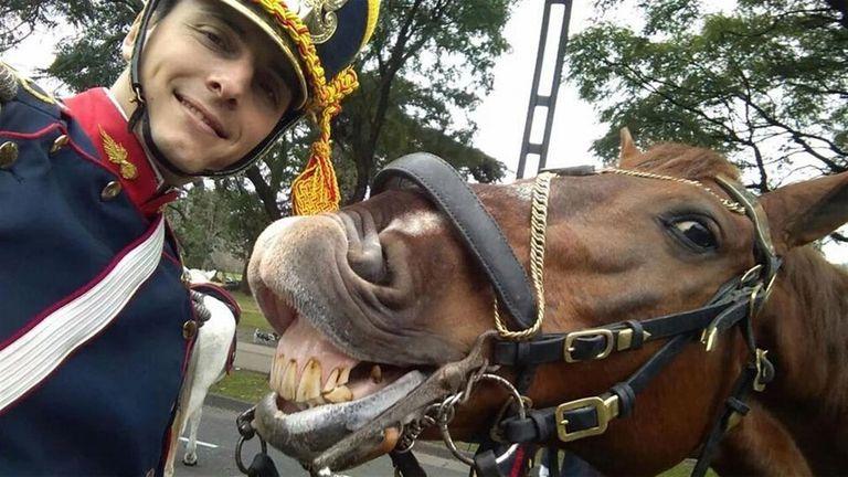 El granadero y el caballo ''Hostil''