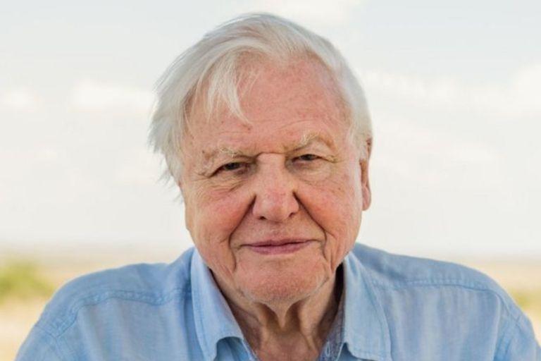 """La advertencia de David Attenborough antes de que sea """"demasiado tarde"""" para salvar al planeta"""