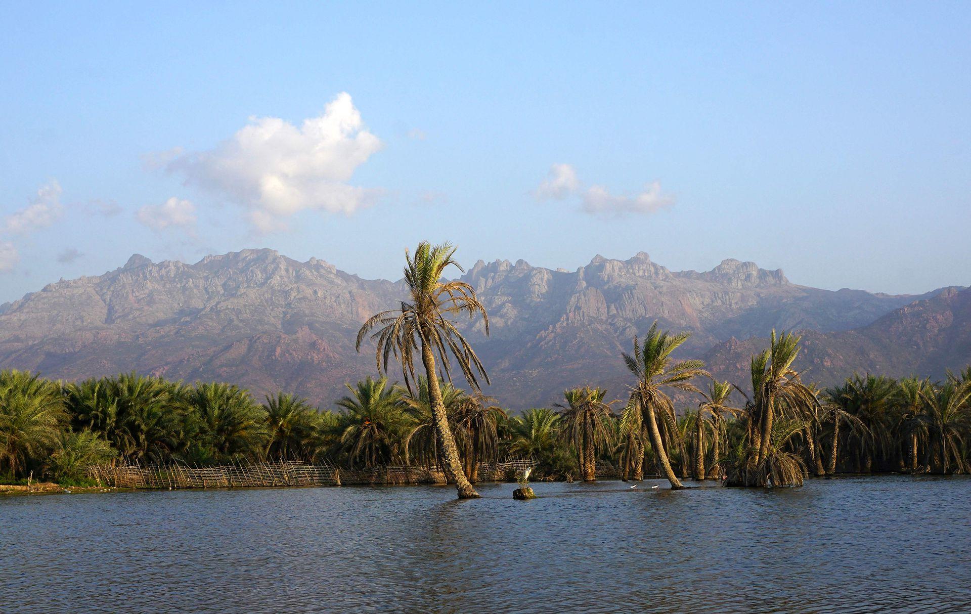 La isla yemení de Socotra mide 130 kilómetros