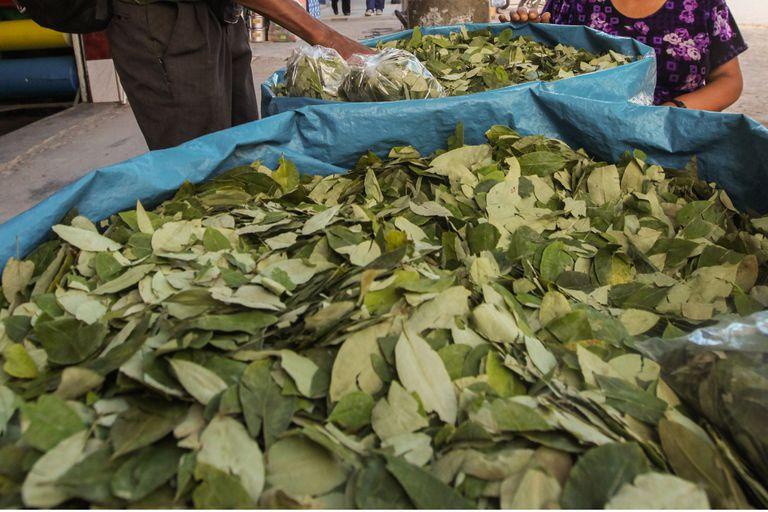 """Autorizan la entrega de hojas de coca para """"coqueo"""" en comunidades originarias de Salta y Jujuy"""