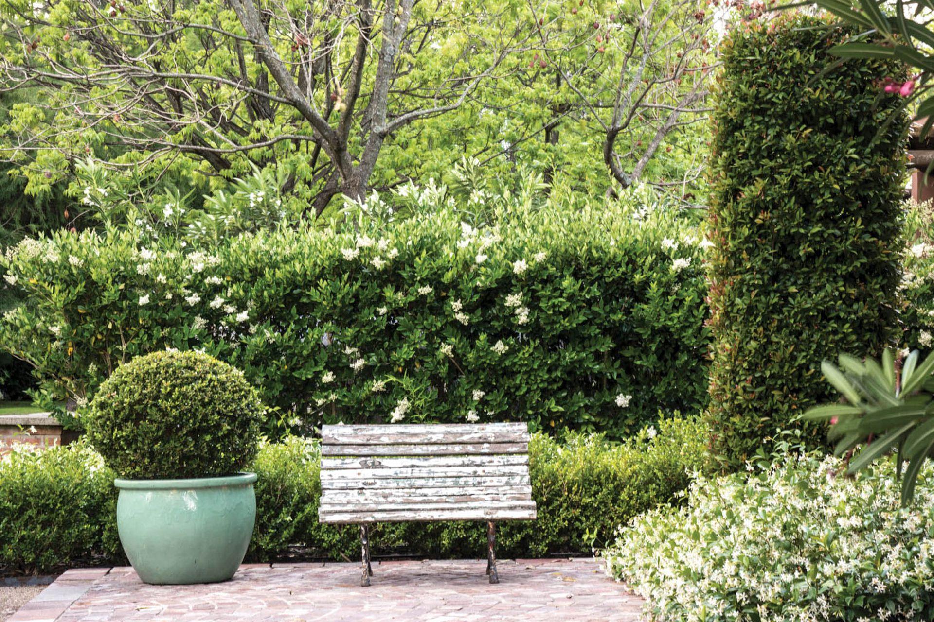 En el patio se plantaron, entre otras, olea texana, Buxus sempervirens, jazmín de leche (Trachelospermum jasminoides), y Syzygium paniculatum. Con estas especies de similar textura, algunas con flores blancas y perfumadas, se trabajaron las formas y los volúmenes. Paisajismo: Maggie Cavanagh.