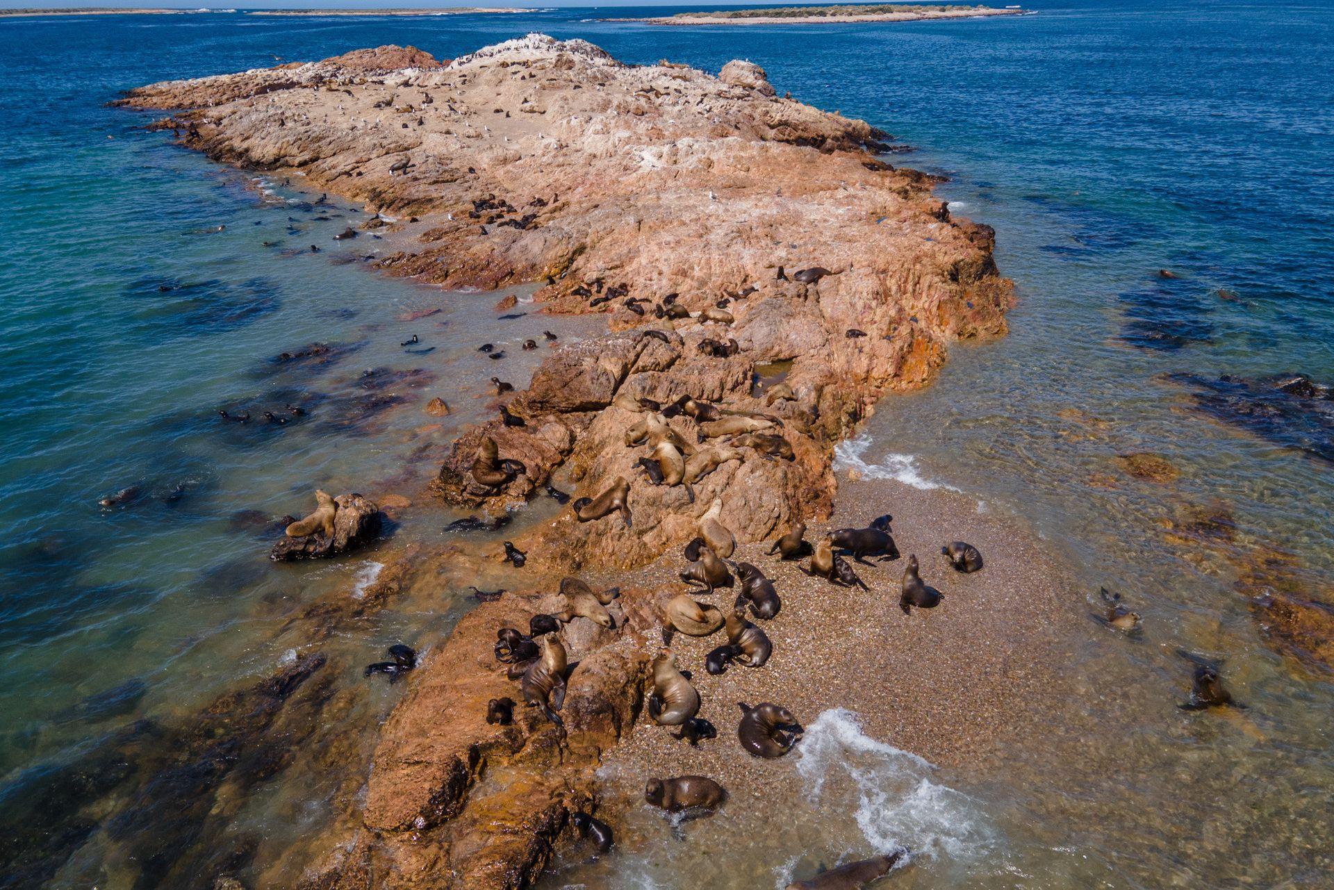 Lobos marinos en Bahia Bustamante lodge, reserva natural y hosteria en la Provincia de Chubut, ahora dedicado al turismo y conservacion de la Fauna Silvestre, la familia Soriano ocupo por primera vez el territorio con el fin de dedicarse a la produccion alguera