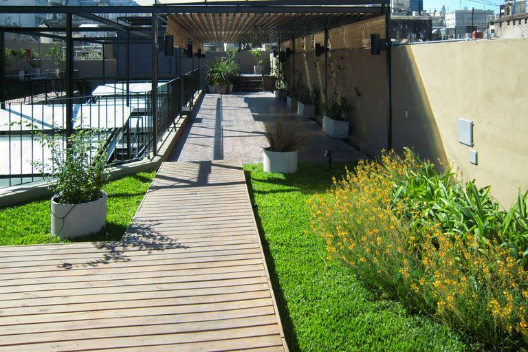 Terraza verde en Medanito