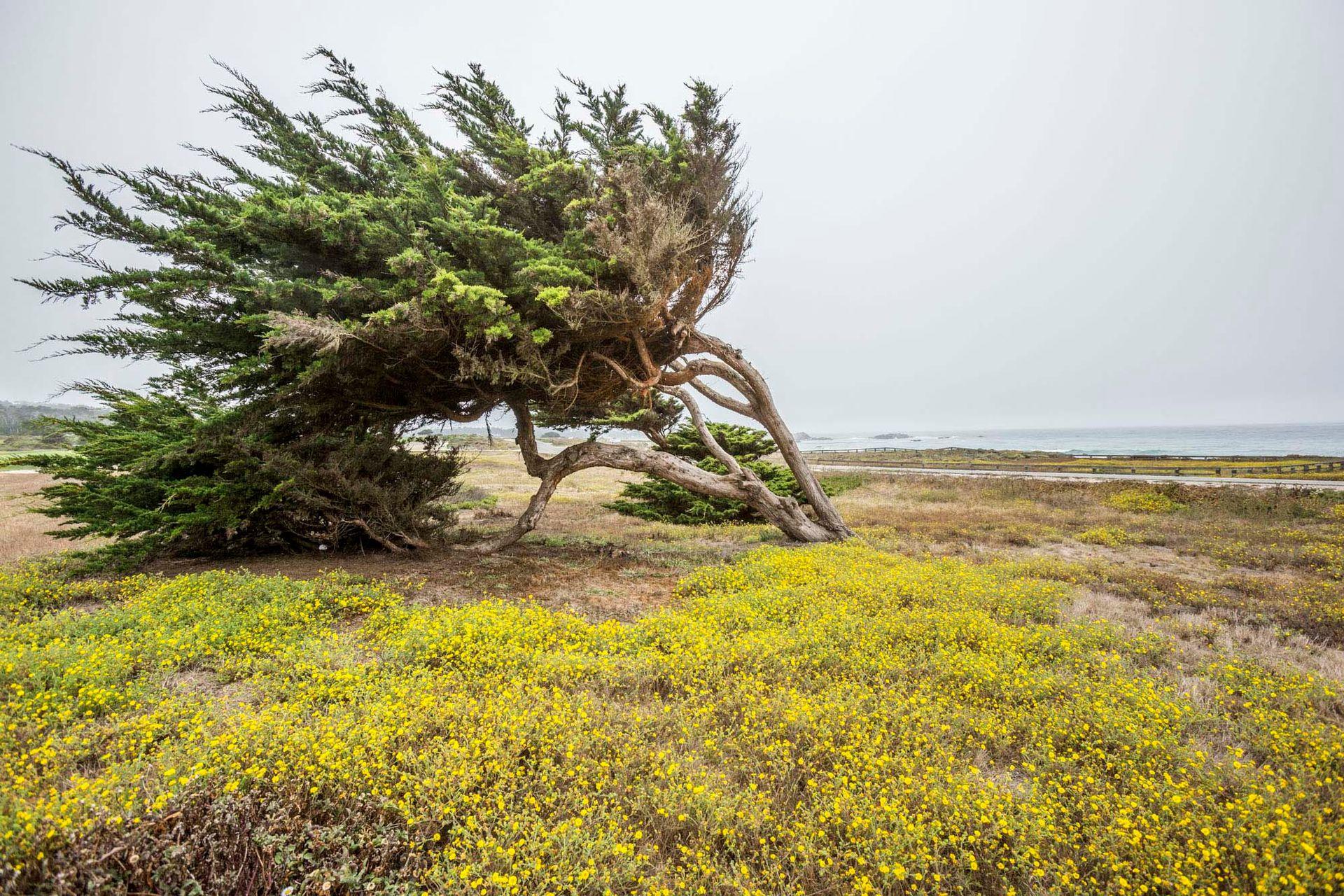 La costa salvaje de Carmel.
