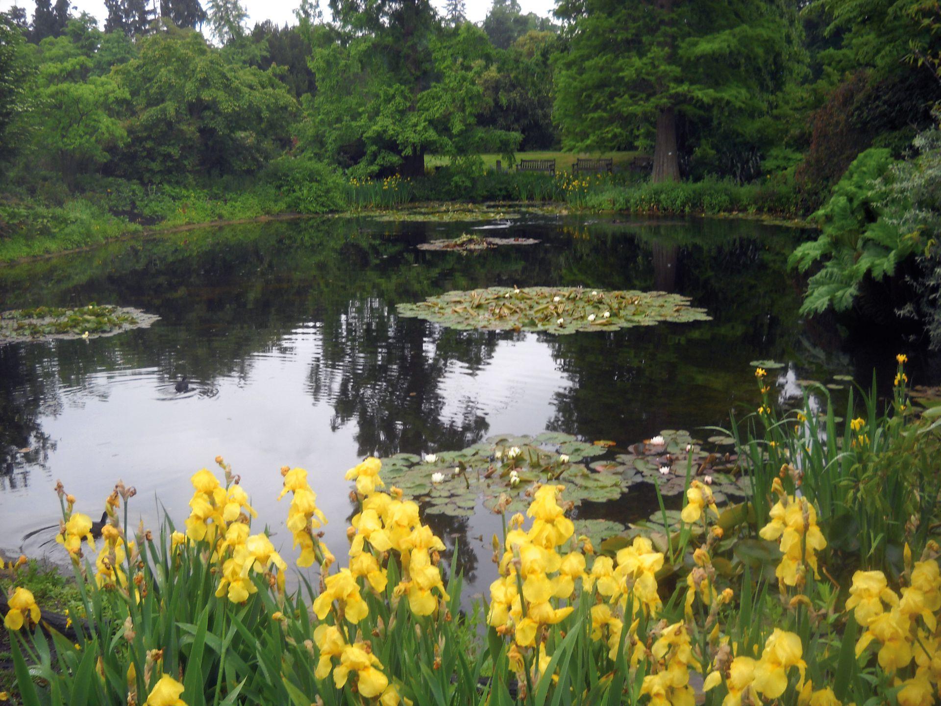 La naturaleza mantendrá el equilibrio natural del jardín acuático