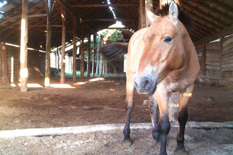 Las imágenes capturadas indican que los caballos usan las estructuras de la misma manera que los antiguos ocupantes