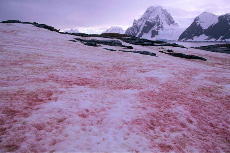 Nieve rosa: el curioso fenómeno que causó sorpresa en una base de la Antártida
