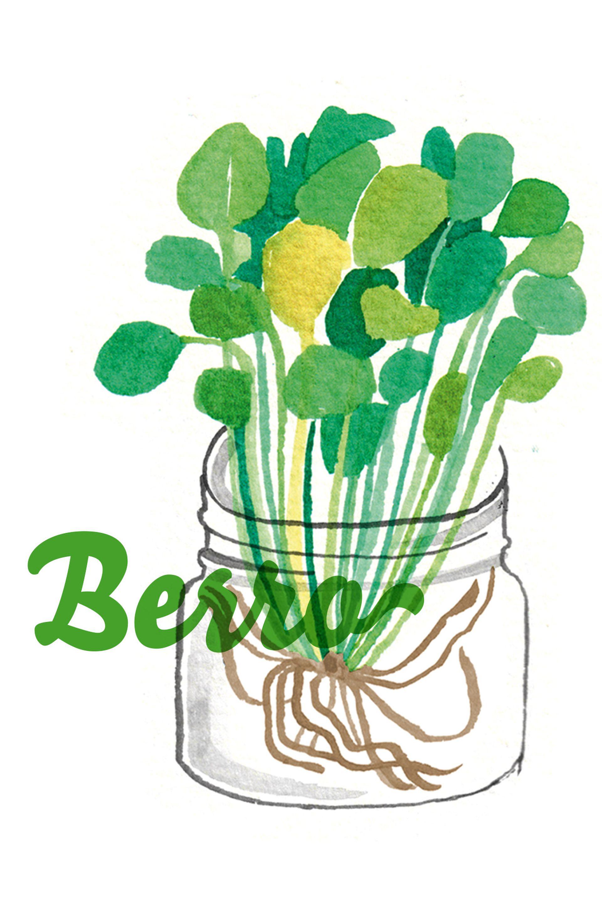 Los frascos transparentes permiten ver de cerca, día por día, el crecimiento radicular de las plantas, una parte fundamental para el buen desarrollo de los cultivos.