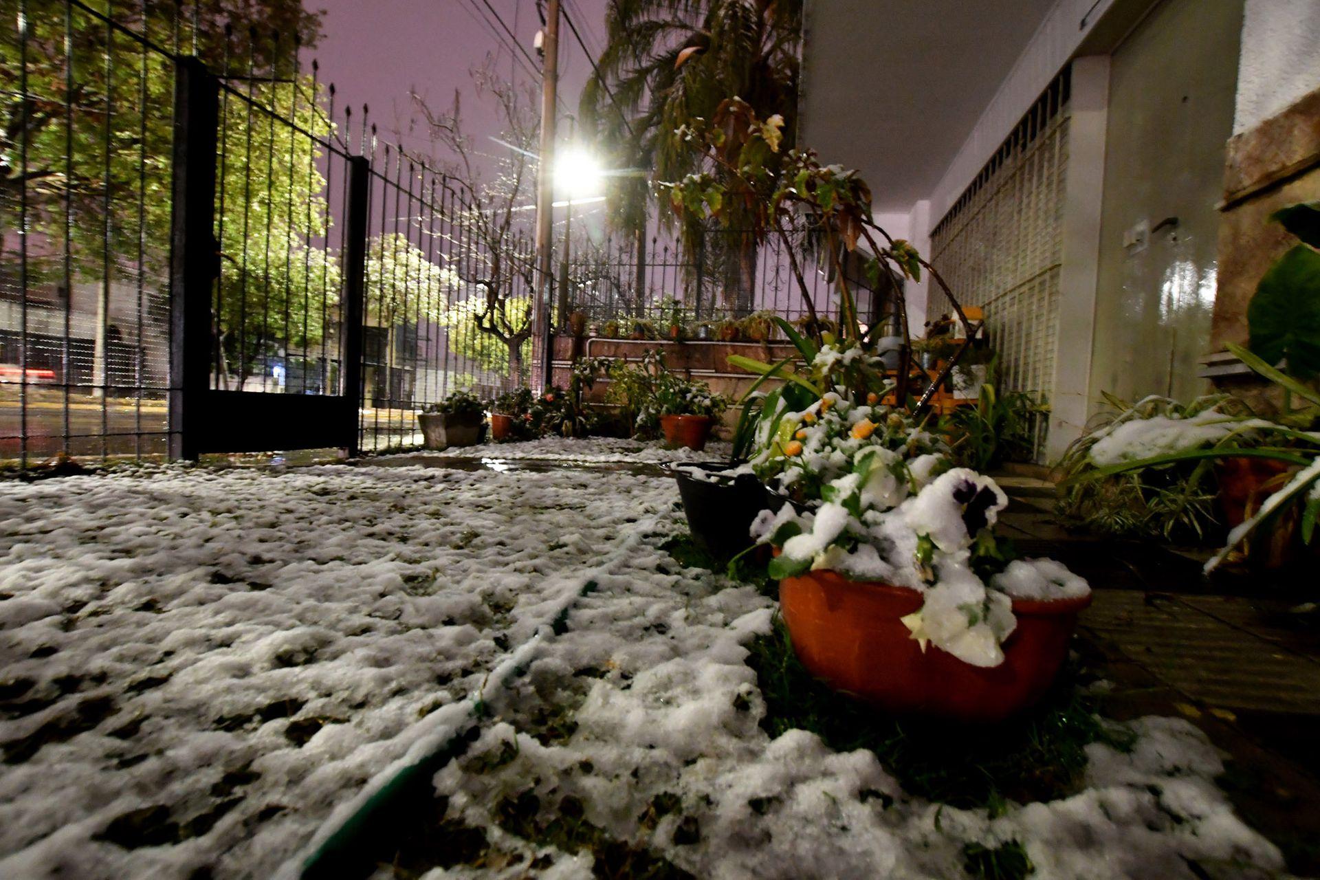 Los jardines tapados por la nieve