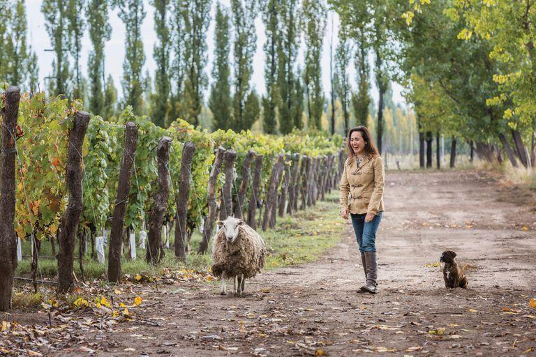 Con el viñedo Adrianna, en la zona de Tupungato Alto, la idea es hacer Gran Vins, que son vinos únicos e inolvidables