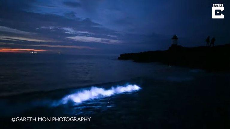 El resplandor azul en el agua produce cuando las algas detectan movimientos brucos, se sienten en peligro y reaccionan lanzando esta sustancia brillante