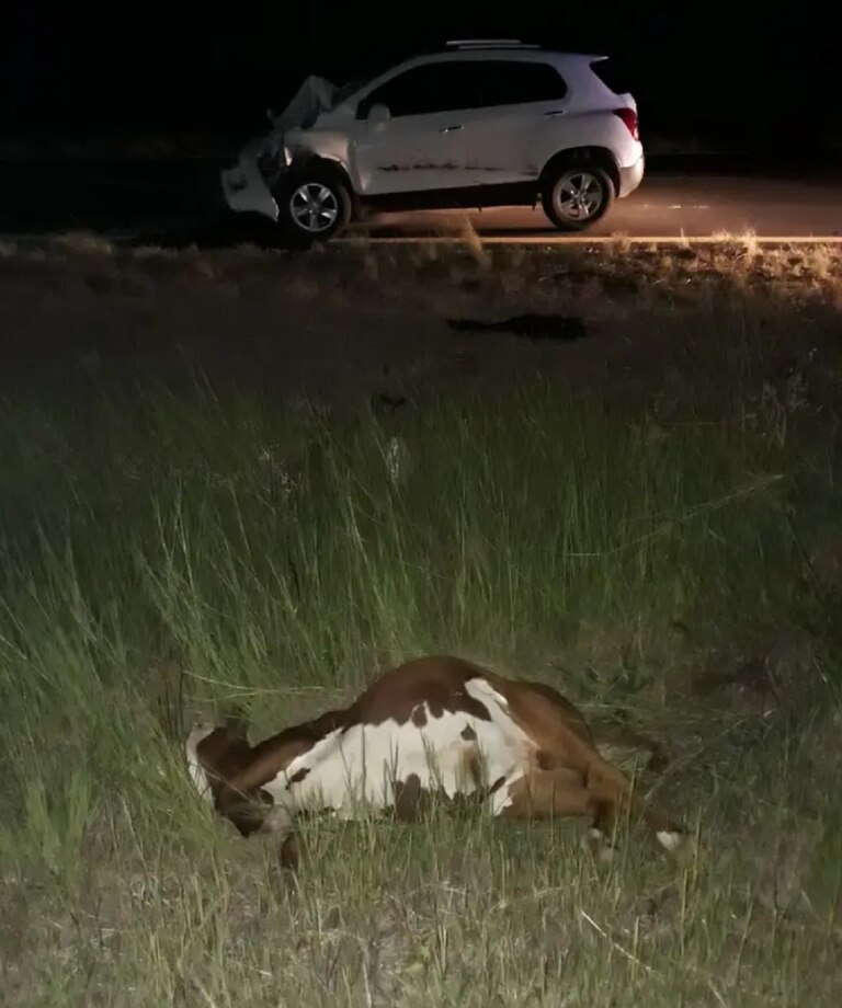 El periodista Martín Boerr, colaborador de LA NACION en Misiones, sufrió un insólito y peligroso incidente vial en la ruta 14, a la altura de Paso de los Libres (Corrientes), se le cruzó por delante un rebaño de vacas que cruzaba la autovía en fila india