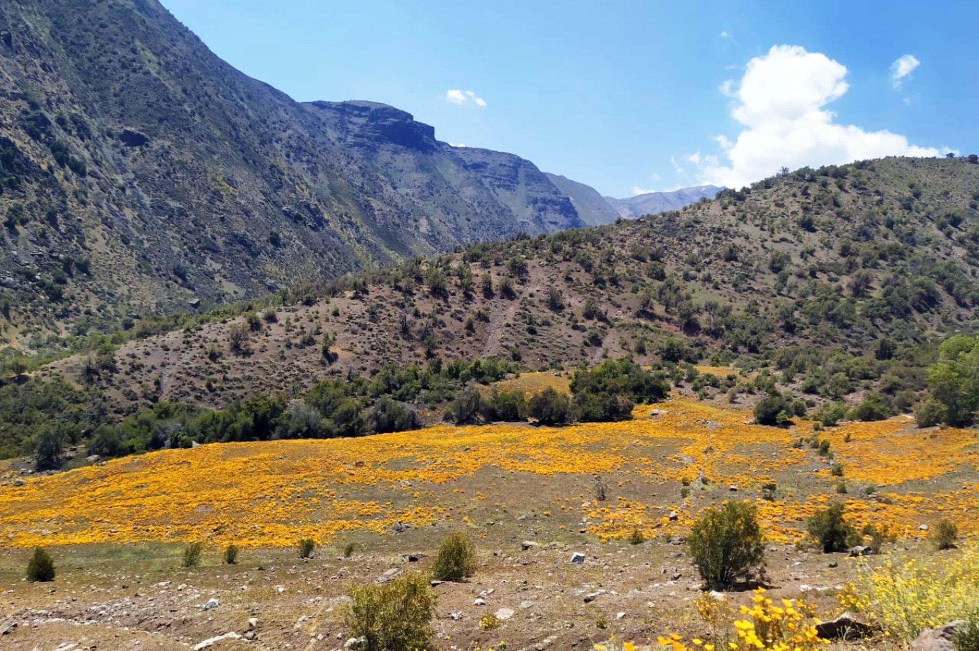 En el santuario hay bosquetes de coníferas, lugares para picnic, un camping, un arboretum y cinco senderos, uno de los cuales finaliza en los glaciares colgantes de los cerro La Paloma y Cerro El Altar.