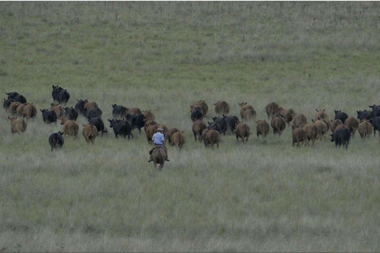 Cambio climático: la ganadería como parte de la solución