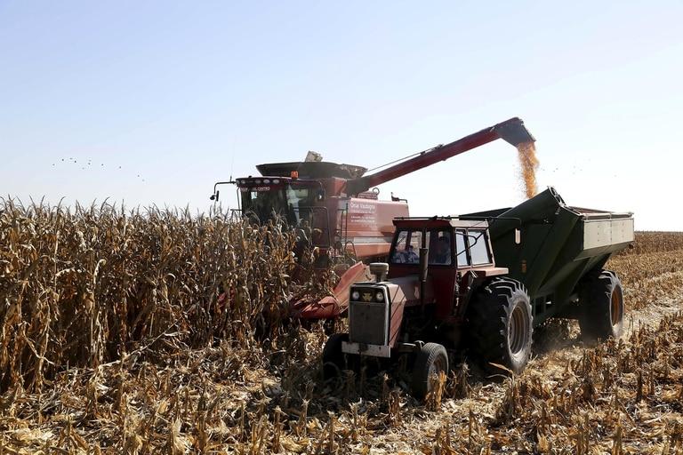 En maíz las retenciones están en el 12%