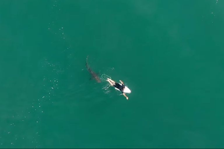 El surfer australiano Matt Wilkinson estuvo a punto de ser atacado por un tiburón y se salvó por la alerta de un drone
