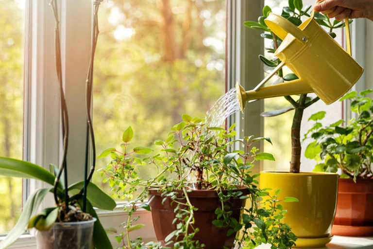 Un hallazgo sobre las plantas podría mejorar la productividad de los cultivos