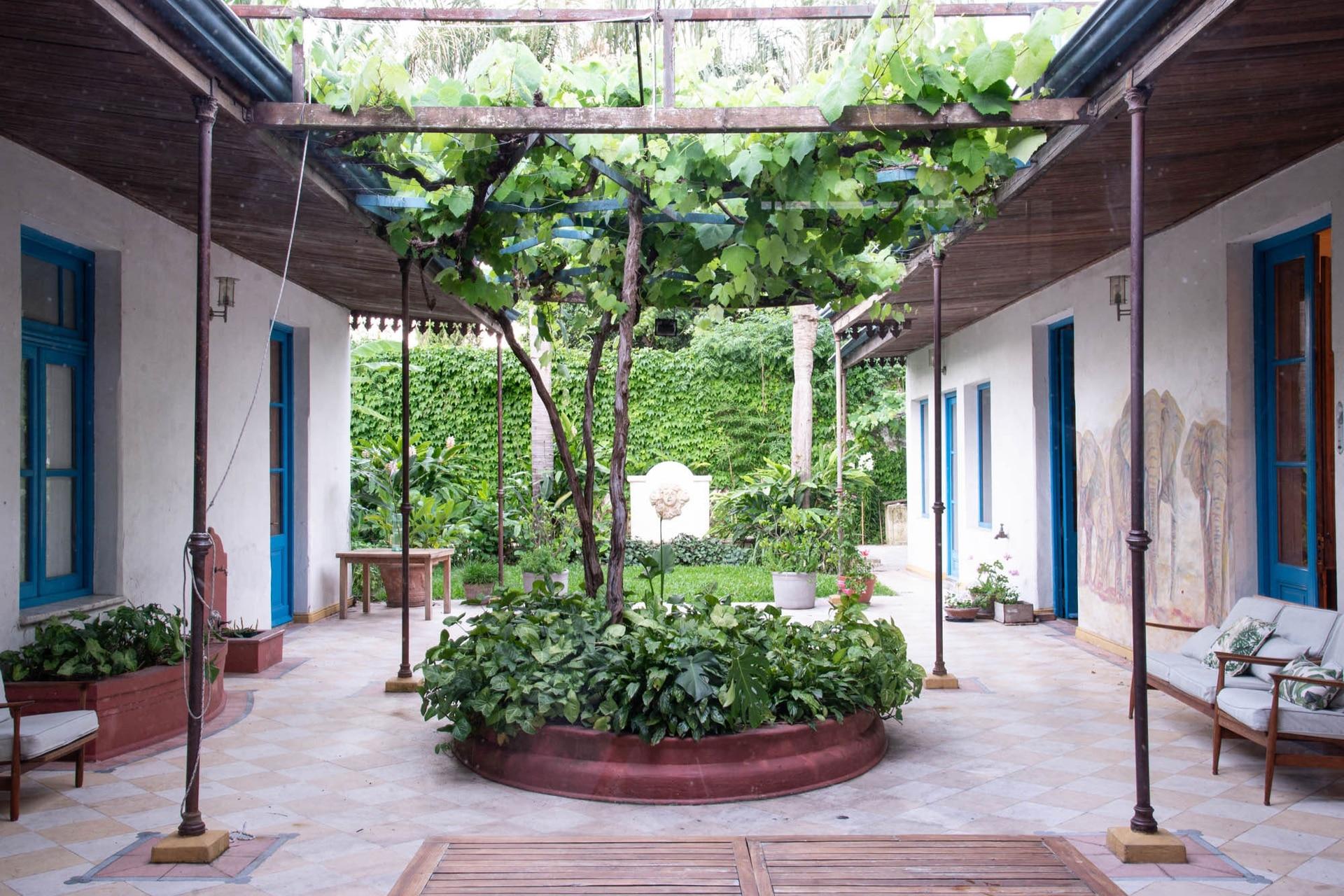 Vista general del patio que une ambas casas, con la pérgola por donde trepa una parra y el cantero central con Syngonium podophyllum.
