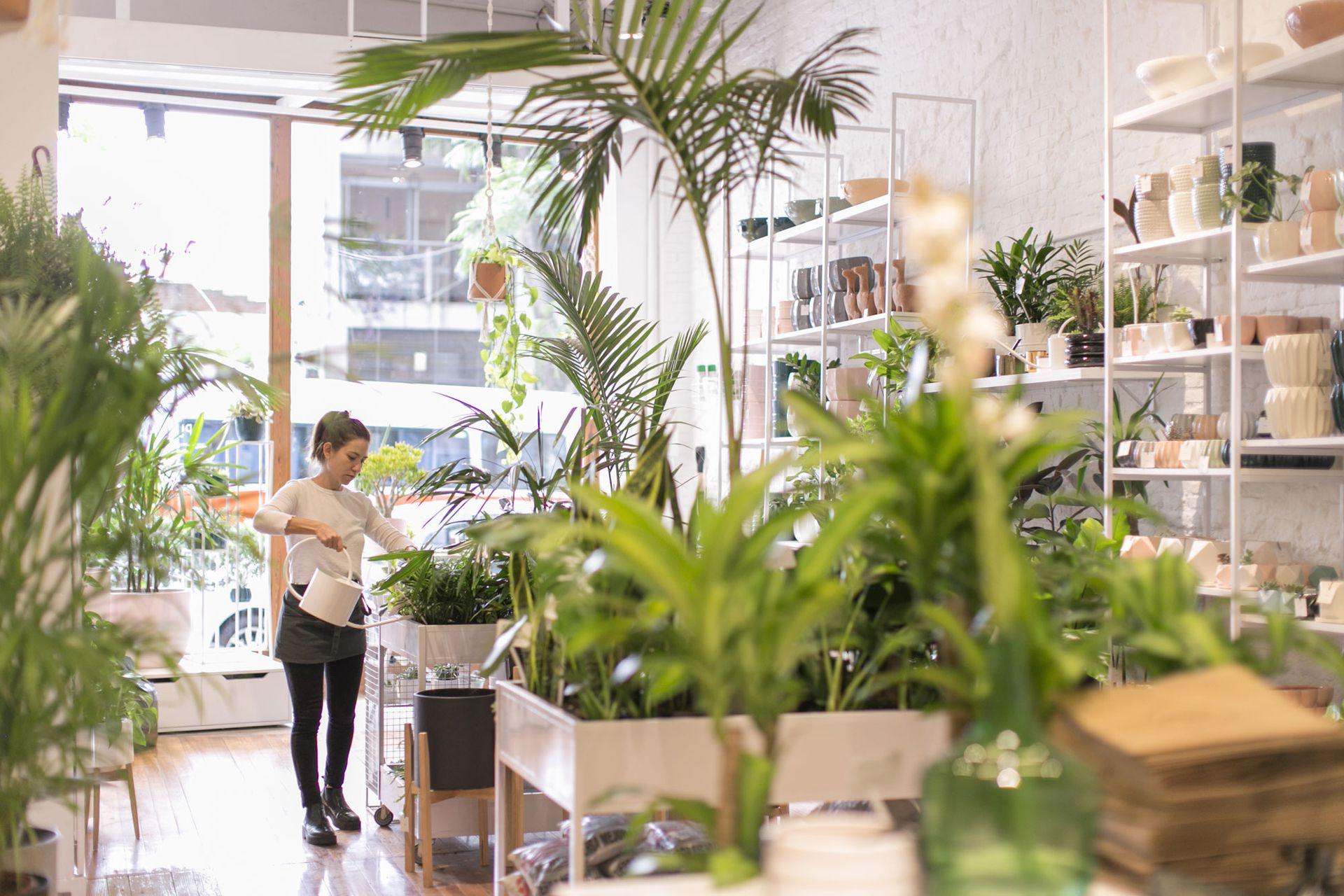 Pötit Lab, una tienda de plantas con lo más trendy del universo botánico.