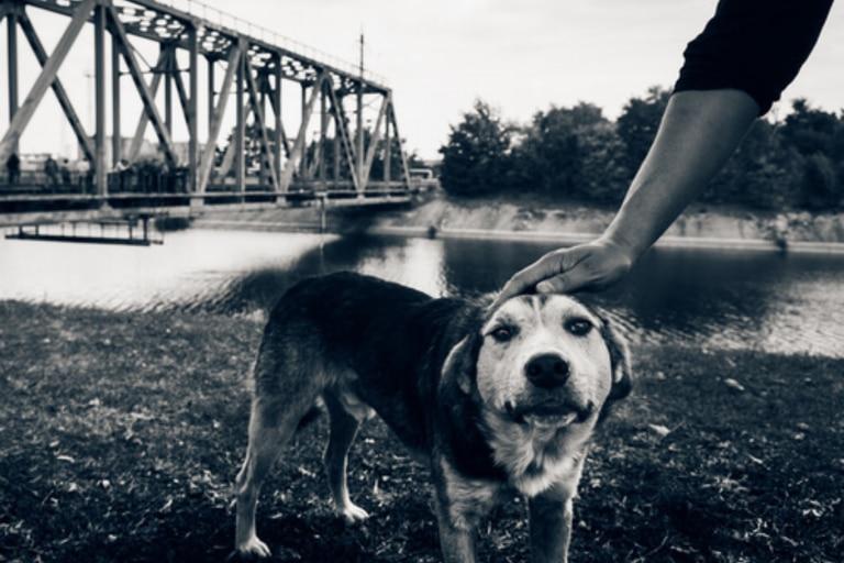 """A pesar de vivir en un área donde los humanos todavía están en gran parte excluidos, los perros alrededor de Chernóbil llevan una vida """"próspera"""""""