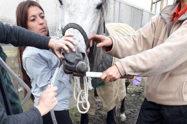 Un caballo necesita ser asistido con una sonda nasogástrica por sufrir un cólico en plena peregrinación