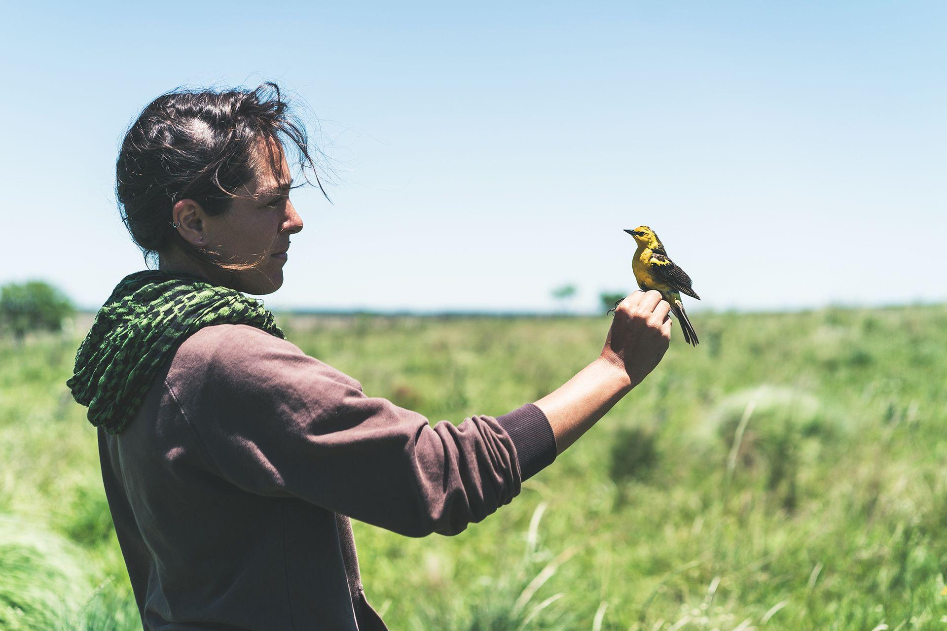 Florencia Pucheta lleva adelante el proyecto de conservación del Tordo Amarillo