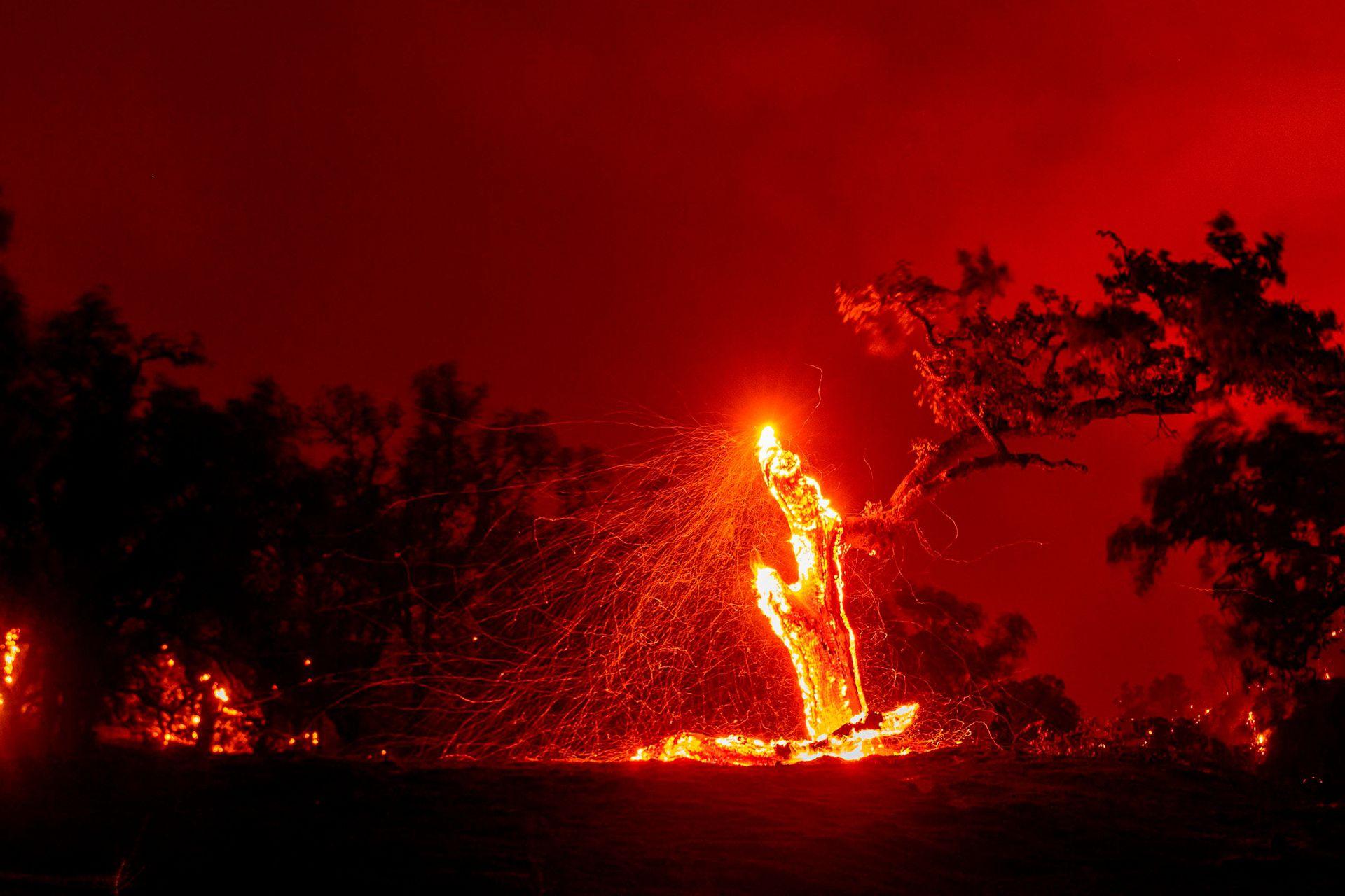 Los bosques están siendo devorados por la llamas